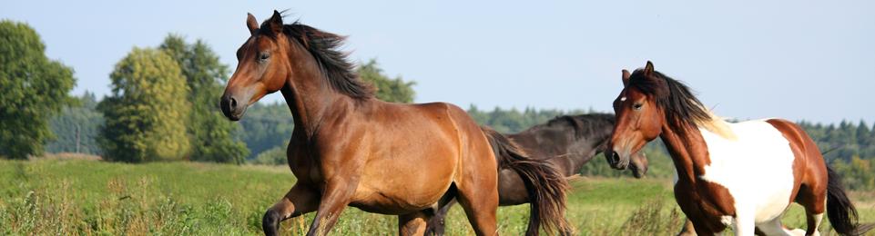 Large Animal - Horses3
